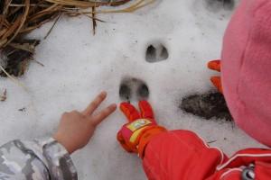 《ニホンジカの足跡とチョキ》2010年
