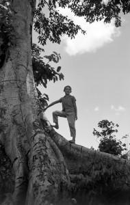 治雄の甥・眞田エリオとイチジクの木、パラナ州ロンドリーナ、1955年 ⒸHaruo Ohara/Instituto Moreira Salles Collection