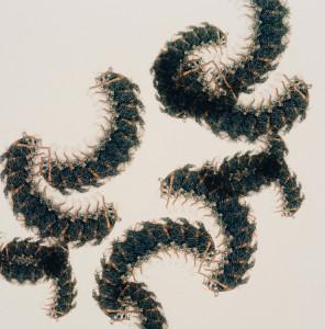 三善チヒロ《根虫 #Amaranthus viridis》2011 ⒸChihiro Miyoshi