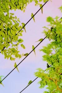 水谷吉法《Tokyo Parrots》2013  Ⓒ Mizutani  Yoshinori