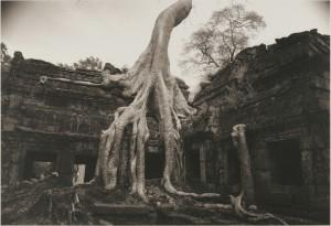 井津建郎《アンコール#27、タ・プローム、カンボジア》1993年 プラチナ・プリント、当館蔵