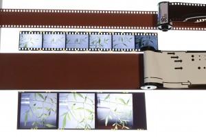 上から35ミリのフィルム、現像済フィルム、120ミリフィルムと現像済フィルム